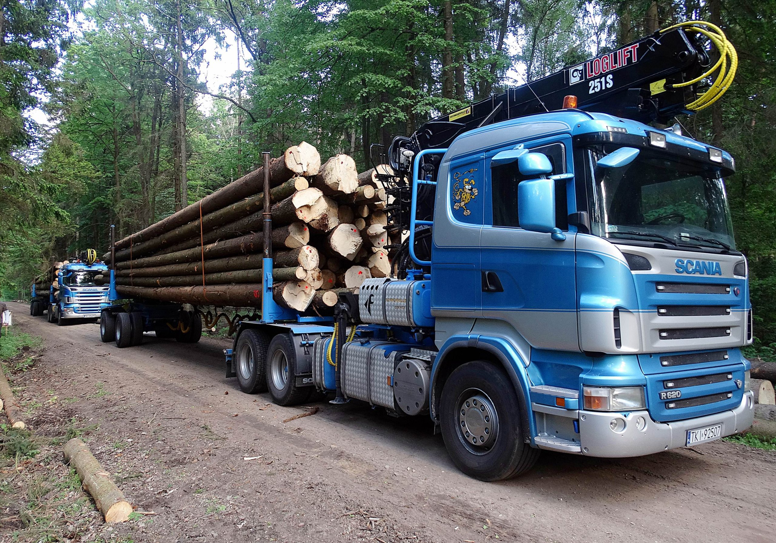 Item Wood for construction timber: pine, fir, spruce, oak