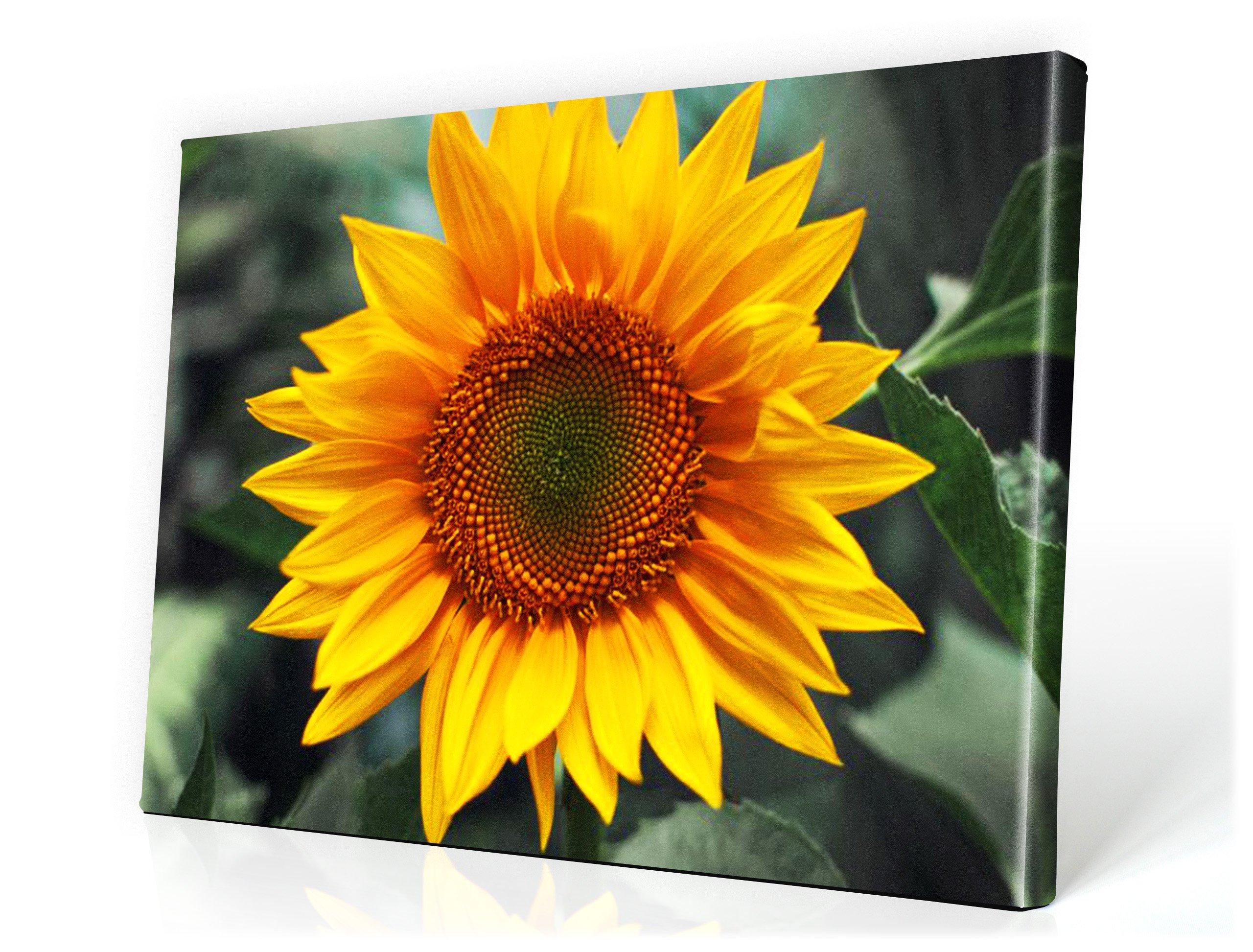 Obrázok 120x80 Kvety Slnečnicové kúpele Snímky