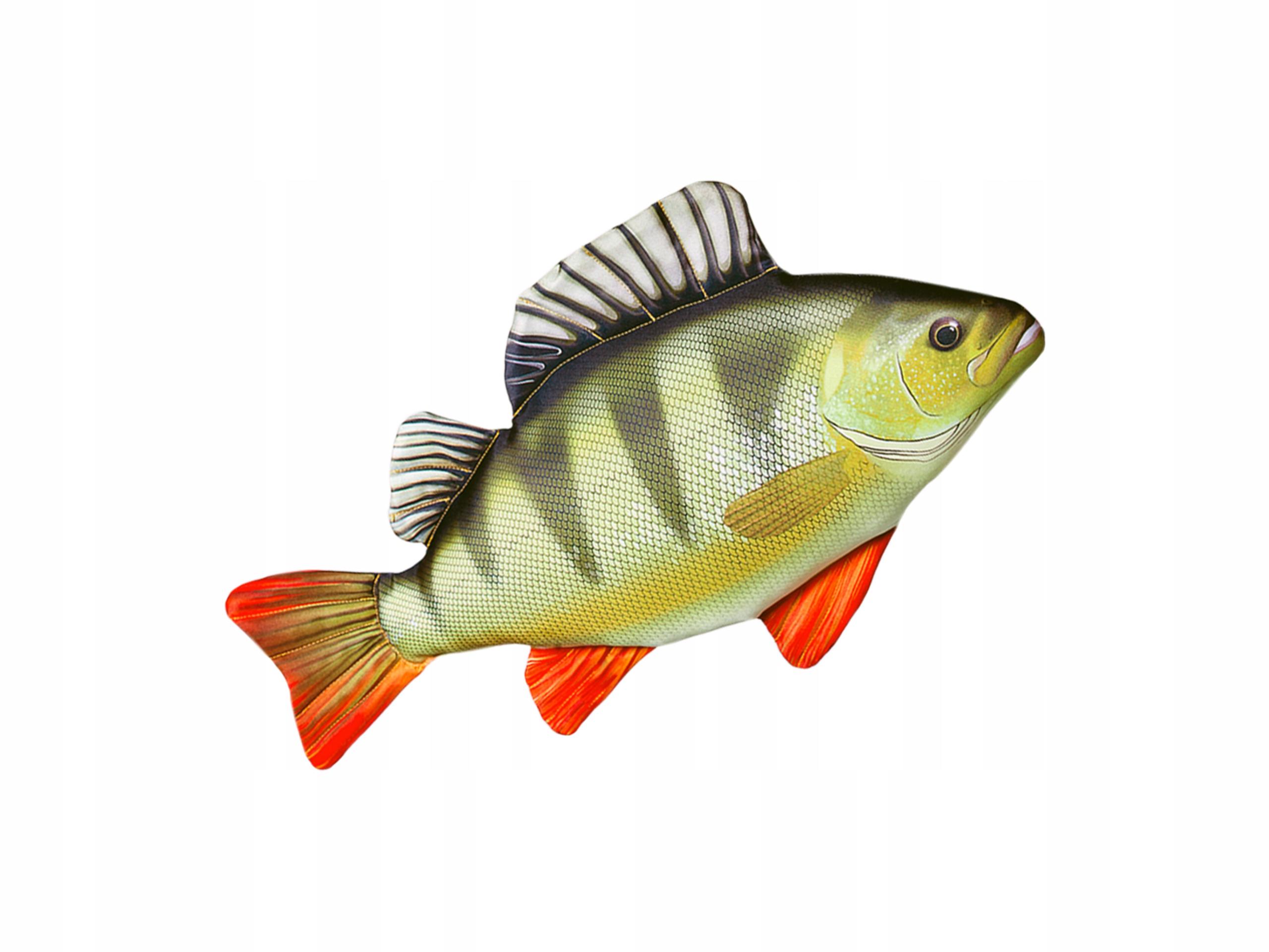 почему картинки рыба окунь на белом фоне такой шов