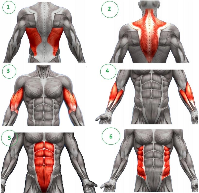 mięśnie montażowe