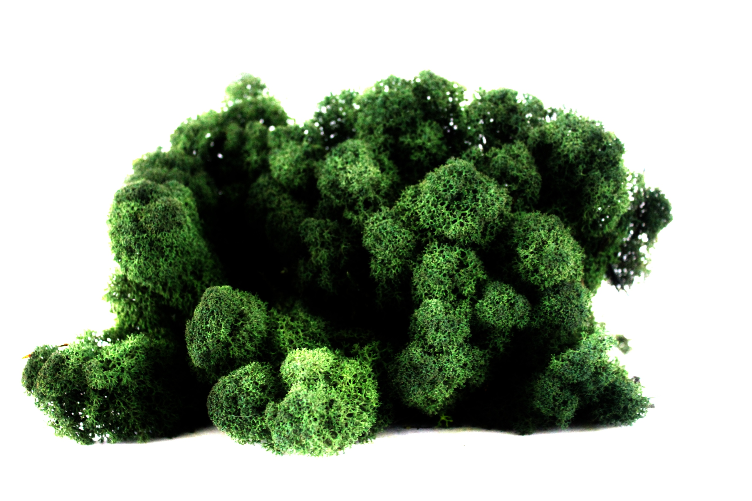 MOSS CHROBOTEK TMAVO zelená TMAVO ZELENÁ 500 g