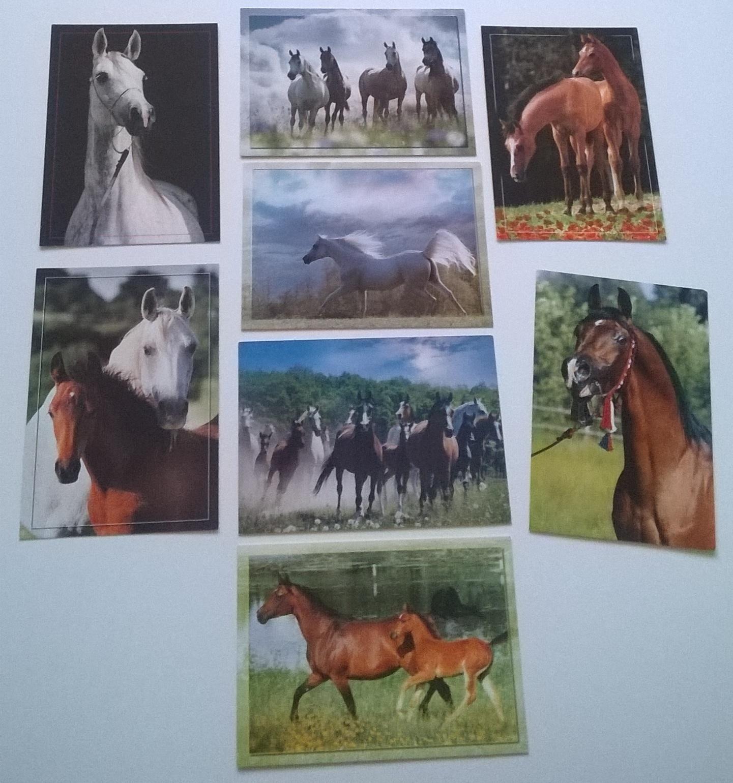 Konie Arabskie Araby Janów Podlaski Raczkowska X8 7238927232