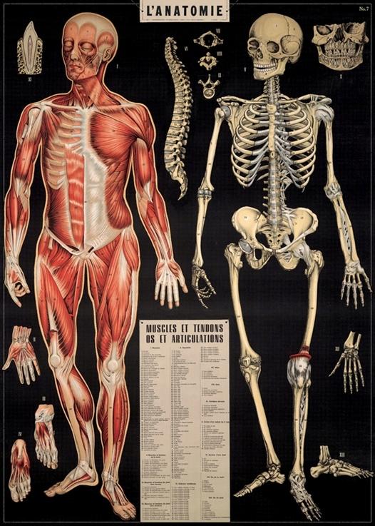 Plakat Vintage Lanatomie Anatomia Człowieka 7516293024
