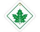Zielony liść listek klonu początkujący kierowca