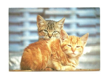Pocztówka - Dwa senne koty w tonacji blue / foto. доставка товаров из Польши и Allegro на русском