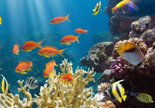 Plakat Akwarium Rafa Koralowa Ryby Morze 70x50 Max