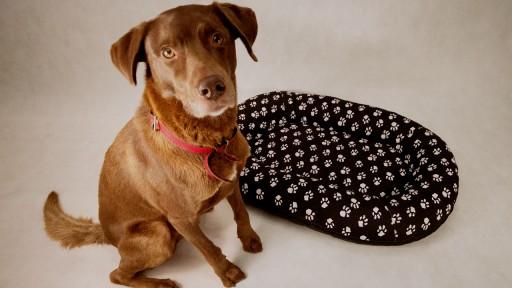 LEGOWISKA dla Psa kojec PONTON ŁAPKI XXL 105x80 R4